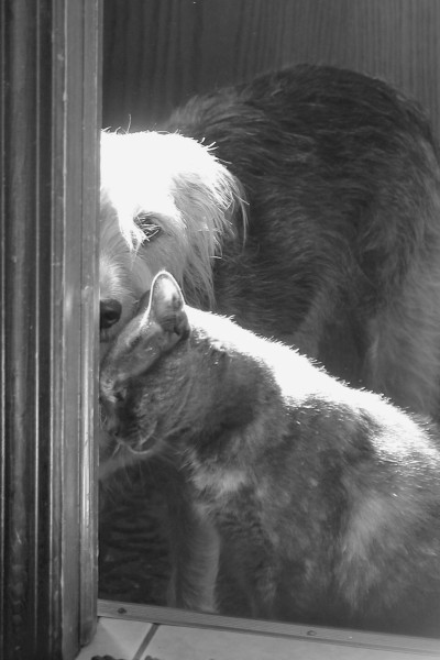 A sweet moment between dog and cat