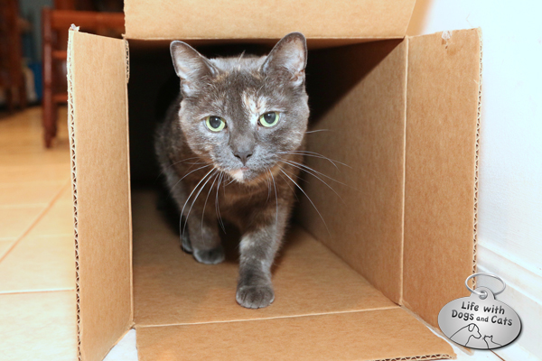 Athena finds the box to her liking as well.