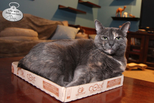 Athena in Core box
