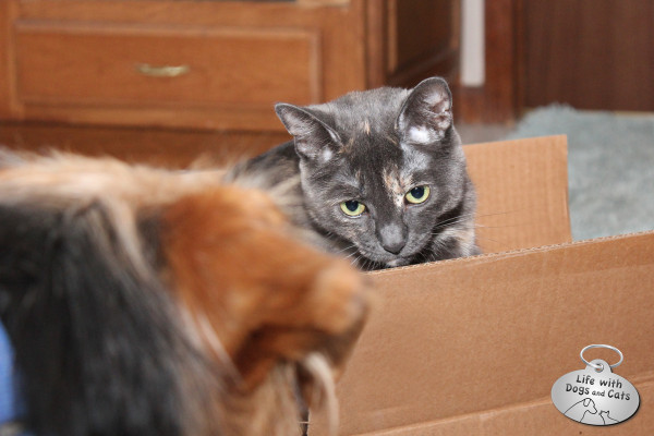 Reasons cats love boxes: They protect you from dogs.