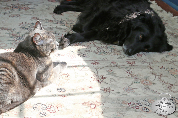 Everyone finds their spot at my house; Athena seeks the sun and Lilah the shade.