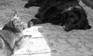 Dog & Cat, Black & White, Sun & Shade