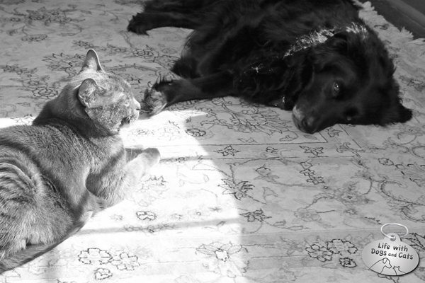 Athena and Dawn, black and white, sun and shade