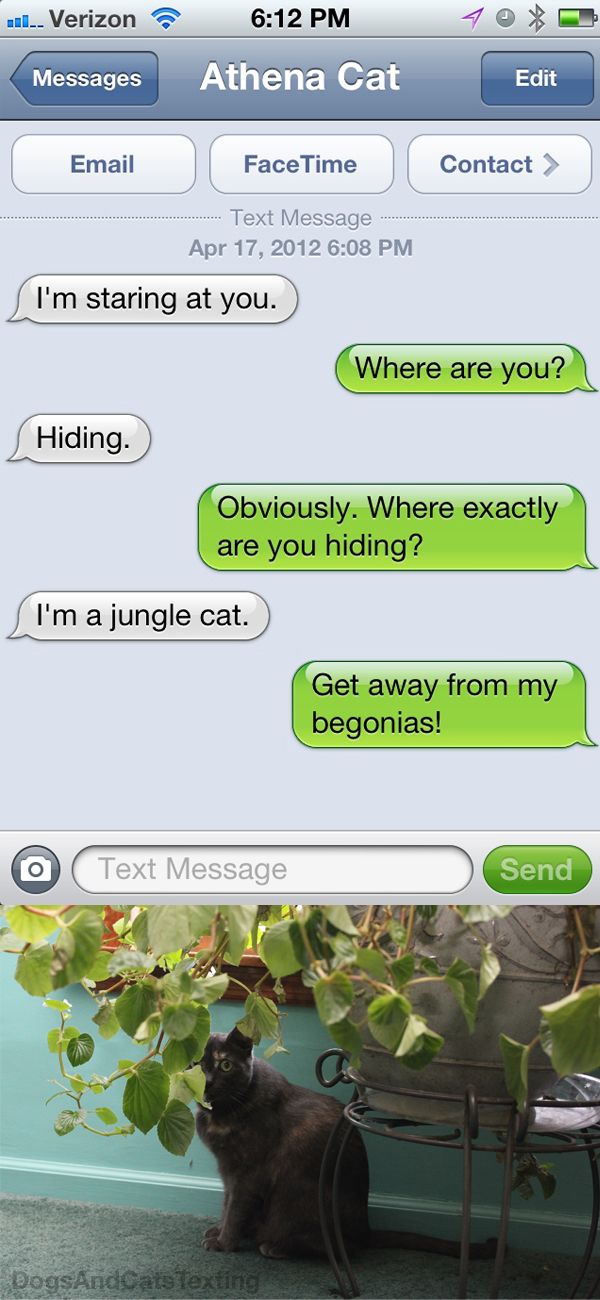 Text From Cat: I'm a jungle cat. Text from me: Get away from my begonias!