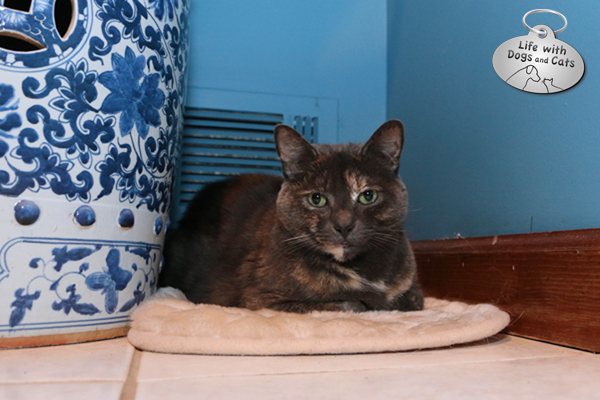 Athena enjoying the heat in her private corner.