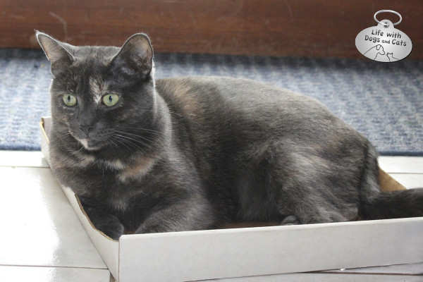Reasons cats love boxes: They go with any decor.