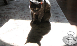 Haiku by Cat: Artwork