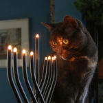 A Jewish Cat's Purr-spective on Hanukkah and Christmas