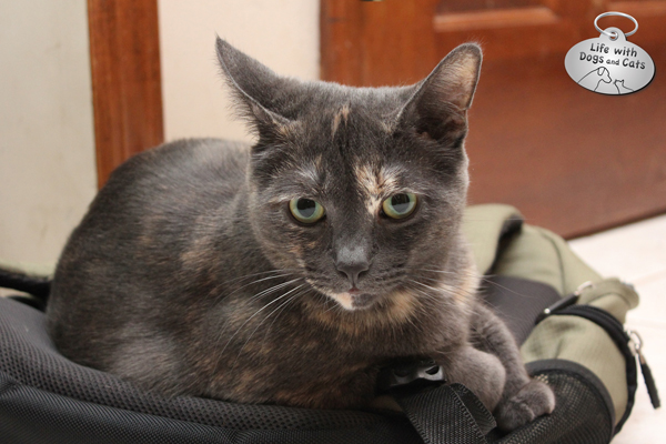 Athena lying on a backpack