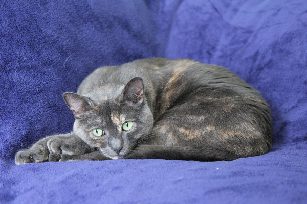Athena on blue blanket