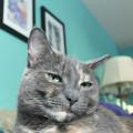 Lap view of cat