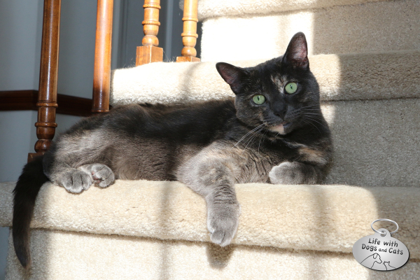 Athena in sun on the stairs