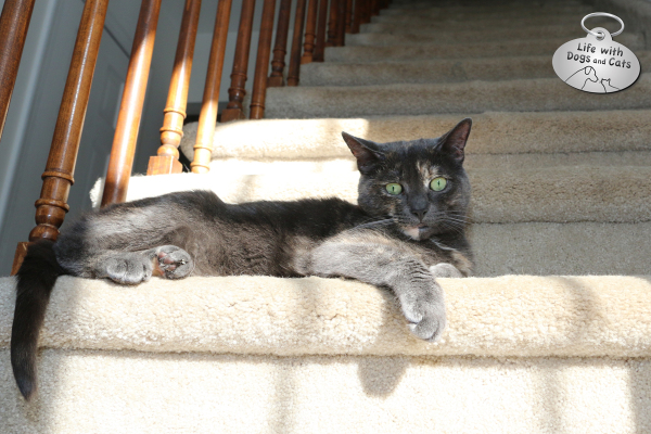 Athena the cat warmed by the sun on the stairs