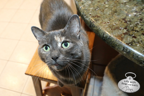 A stepstool in the kitchen gives cats a place to own when the concentration of felines increases during mealtime.