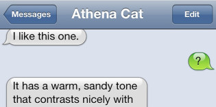 Text from Cat: Athena, Interior Designer