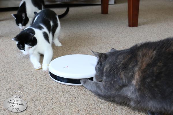Technology Amp Pets My Cats Test The Frolicat Flik Life