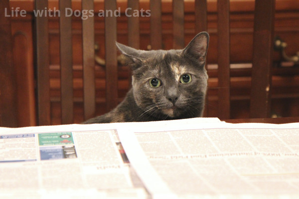 Athena wants to know why her interview isn't in the Wall Street Journal