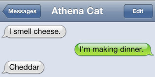 Text from Cat: Say cheese!