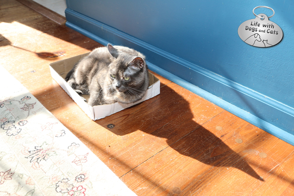The sun shines in our dining room in the afternoons, so I make sure there are plenty of beds (and boxes) for each cat to find his or her own piece of sun.