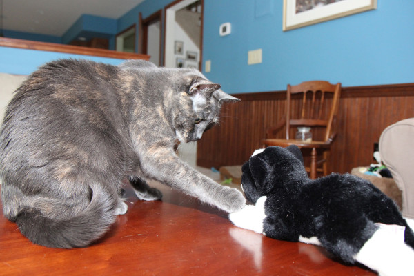 Athena the cat does not like the way the cat toy is looking at her.
