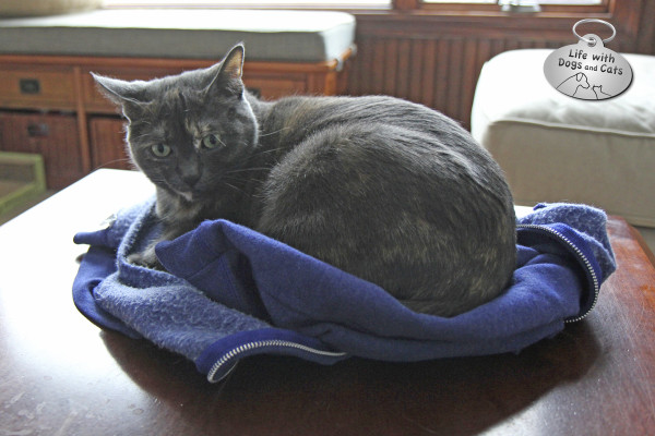 World Cat Day activity: resting in a cat bed