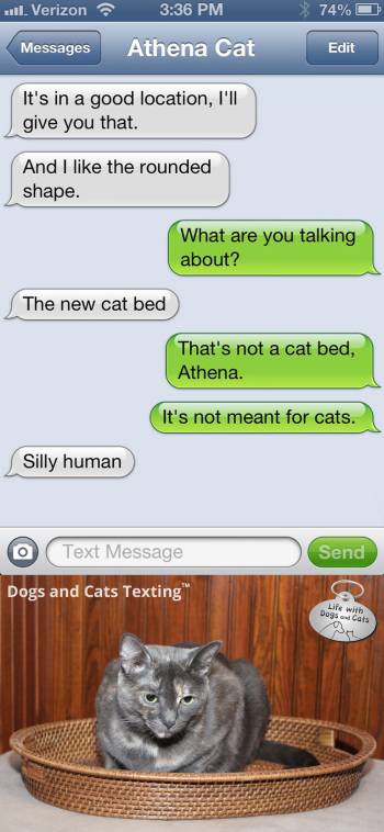 Text from Cat: Silly human. Everything is a cat bed
