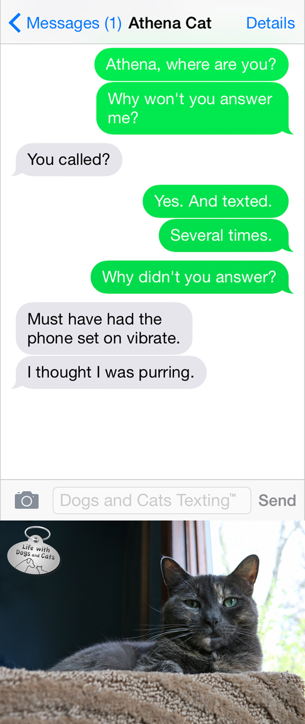 Text from Cat: Was that you calling? I didn't pick up cuz I thought  I was purring.