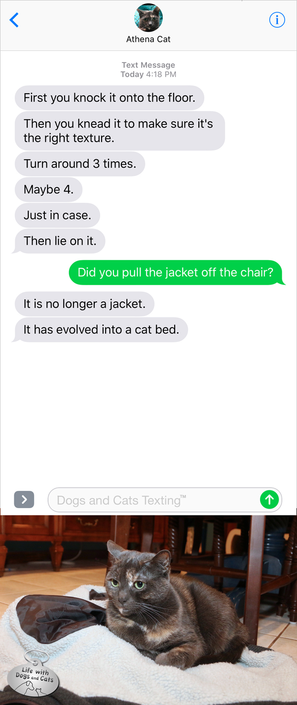 #TextFromCat: First you knock it on the floor. Then you knead it. Turn around 3 times. Lie on it. Me: Did you pull the jacket off the chair? Cat: It's no longer a jacket. It has evolved into a cat bed.