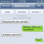 Text from Cat: Is there a cat on it?