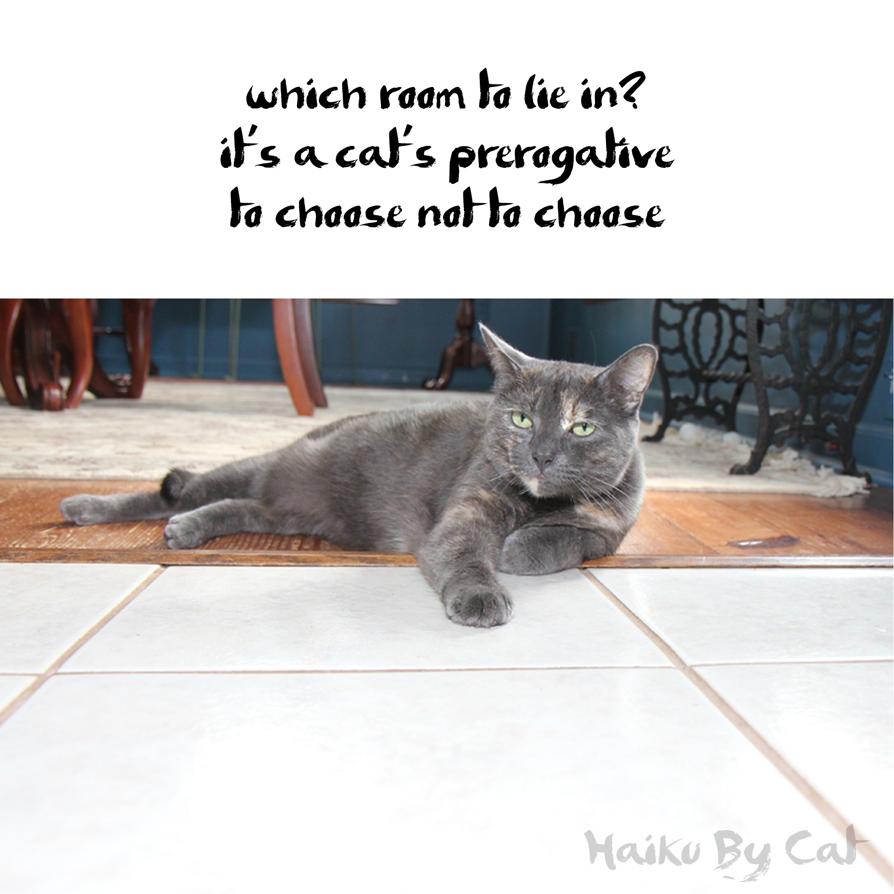 Haiku by Cat: which room to lie in/ it's a cat's prerogative / to choose not to choose