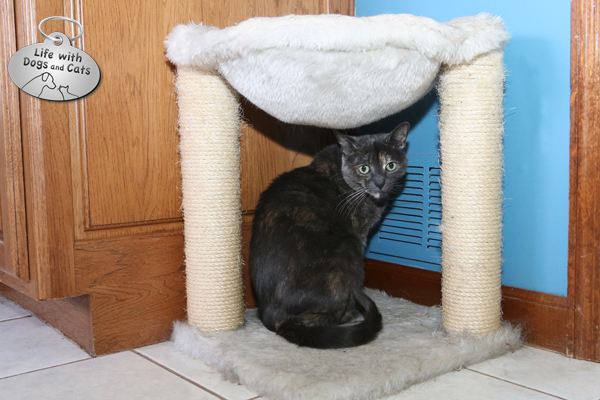 In the winter, the cats like to warm up by our heating vents. So, I put a few beds and scratchers in those places.