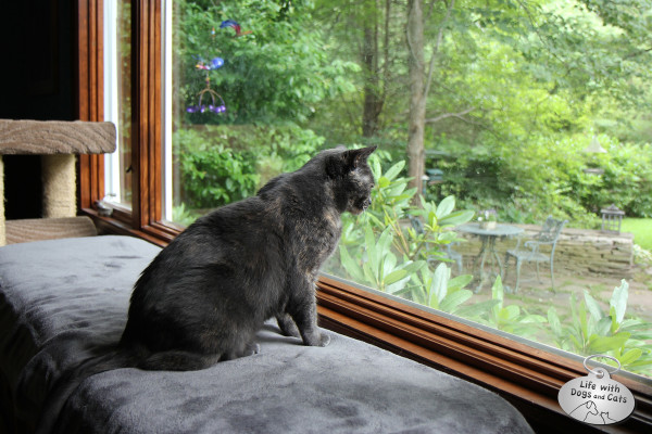 Cat watches birds, squirrels and chipmunks