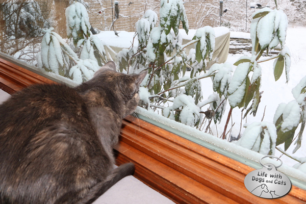 Best entertainment for cats: set up some birdfeeders outside a window.