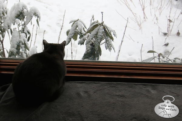 Athena watching the snow fall.