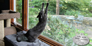 Haiku by Cat: Unscathed