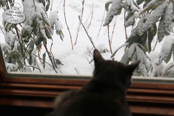 Athena watches the birds scrounge for the seed I set out for them.