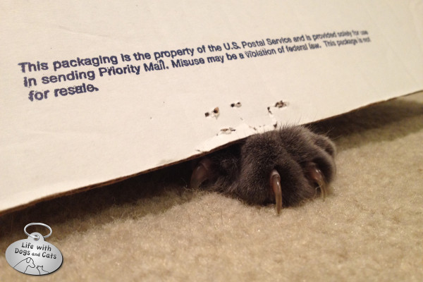 Reasons cats love boxes: You can swat people and dogs when they go by and nobody will know it's you.