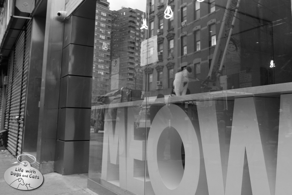 Trucks and cranes are visible in the reflection of Meow Parlour's storefront, but one kitty knows it's more fun inside.