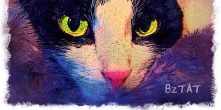 Cat Art: Calvin by BZTAT