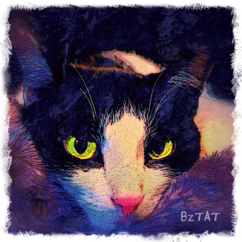 Calvin, by BZTAT