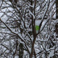 Tucker's ball is stuck in the tree
