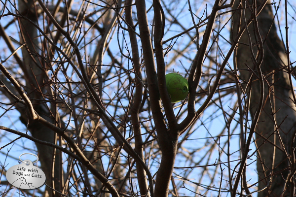 Tucker's ball is stuck in the tree