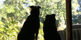 Haiku By Dog: Bearable
