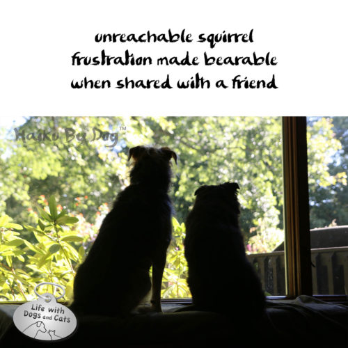 #HaikuByDog unreachable squirrel / frustration made bearable / when shared with a friend