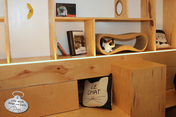 The entire back wall is made up of climbable bookshelves and cubbies for cats to hang out in.