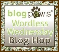 Blog Paw Wordless Wednesday