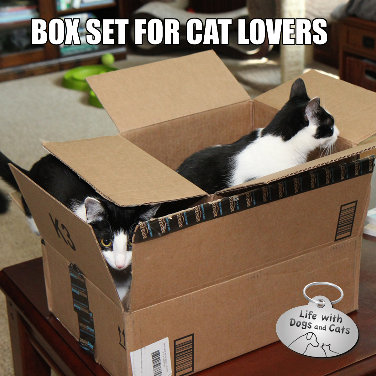 Box set for cats Calvin Elsa Clair