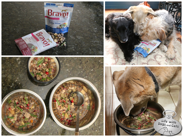 Bravo pet food Life with Dogs and Cats