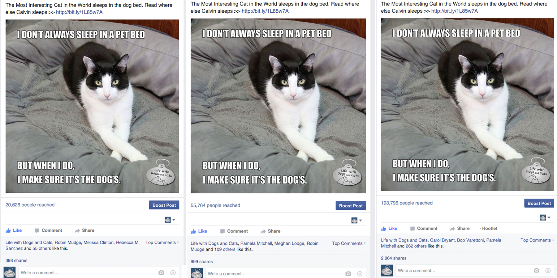 The Most Interesting Cat in the World Goes Viral