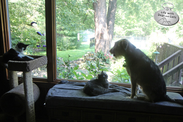 Athena the cat would really rather not share her bench with Tucker the dog.